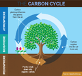 The-carbon-cycle biosphere.png
