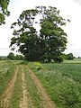 The Footpath to West Halton - geograph.org.uk - 1346935.jpg