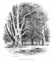 The New Forest its history and its scenery - page 250.png