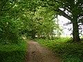 The North Downs Way - geograph.org.uk - 460495.jpg