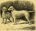 The dogs of the British Islands, being a series of articles on the points of their various breeds, and the treatment of the diseases to which they are subject (1878) (20802557739).jpg
