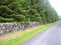 The edge of the forest - geograph.org.uk - 454965.jpg