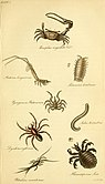 The entomologist's text book - an introduction to the natural history, structure, physiology and classification of insects, including the Crustacea and Arachnida (1838) (14780199214).jpg