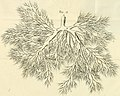 Theodori Kerckringii, Doctoris medici Opera omnia anatomica - continentia Specilegium anatomicum, Osteogeniam foetuum, nec non Anthropogeniae ichnographiam - accuratissimis figuris aeri incisis (14758668896).jpg