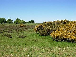 Thetford Heaths