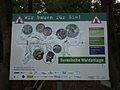 Tiergarten Worm 2011 Bauprojekt Eurasische Waldanlage.JPG