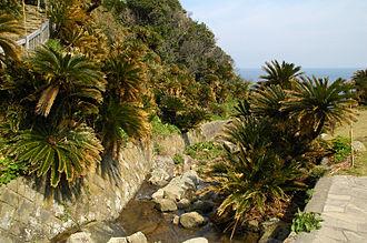 Miyazaki Prefecture - Cape Toi, habitat of Cycas revoluta (Sotetsu)