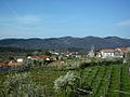 Tomaj pomladi - springtime in Tomaj (7198691912).jpg