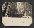Tourists with Wawona Tunnel Tree (16392141303).jpg