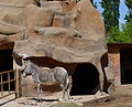 Touroparc Zoo - zèbre.JPG