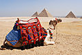 Traditionally decorated camel against background of Great Pyramid of Giza (Khufu's pyramid), Pyramid of Khafre, Pyramid of Menkaure (left to right). Giza, Cairo, Egypt, North Africa.jpg