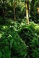 Trail to Aihualama Falls (5171245248).jpg