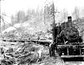 Train loaded with logs, Snohomish County, ca 1912 (PICKETT 323).jpeg