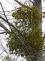 Tree 1240373.jpg
