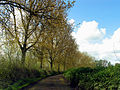 Treelined Country Road to Frilsham - geograph.org.uk - 5838.jpg