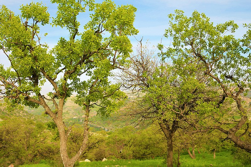 File:Trees121.jpg