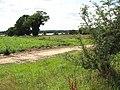Trees growing on field boundary - geograph.org.uk - 1425468.jpg