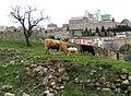 Troina - Zona archeologica - panoramio.jpg