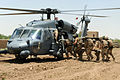 Troops Carry Casualty to Blackhawk Helicopter MOD 45150649.jpg
