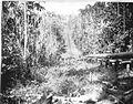 Tropenmuseum Royal Tropical Institute Objectnumber 60009003 Pijp voor het opvoeren van water naar.jpg