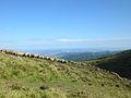 Troupeau de moutons au Cliersou.jpg