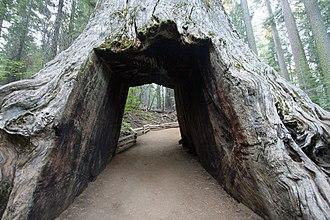 Tuolumne Grove - Image: Tuolumne Grove Trailhead 09 (4244818695)