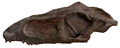 Turfanosuchus skull.png