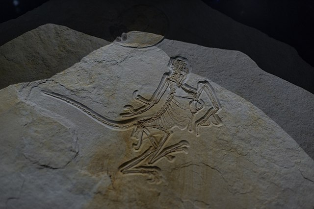 https://upload.wikimedia.org/wikipedia/commons/thumb/f/f9/Twelfth_Archaeopteryx_specimen.jpg/640px-Twelfth_Archaeopteryx_specimen.jpg