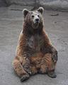 Tyan-Shan bear.jpg