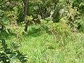 UNESCO Niokolo-Koba National Park Senegal (3686557139).jpg