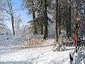 Uetliberg - Uto Kulm - Oppidum-Uetliburg - Innenwall 2012-10-29 15-32-27 (P7700).JPG