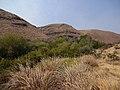 Umtanum Recreation Site (32417784323).jpg