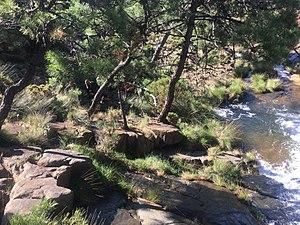 Vegetacion entre roca peridotita.jpg