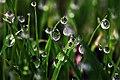 Veranda rice nursery - Flickr - m-louis.jpg