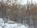 Vidnoye, Moscow Oblast, Russia - panoramio (80).jpg