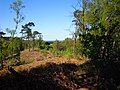 View Point in Pretty Corner Woods 12 May 2012.JPG