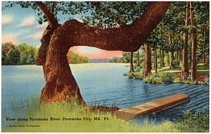 Pocomoke City, Maryland - Image: View along Pocomoke River, Pocomoke City, Md (70296)