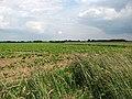 View northeast across sugar beet field - geograph.org.uk - 848839.jpg