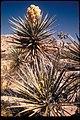 Views at Joshua Tree National Park, California (225fd53b-b0a2-49fb-9791-273be7b05a09).jpg