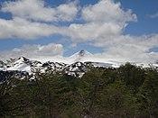 Villarrica Nieve Bosque.jpg