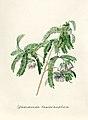 Vintage Flower illustration by Pierre-Joseph Redouté, digitally enhanced by rawpixel 51.jpg