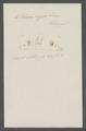 Volvaria oryza - - Print - Iconographia Zoologica - Special Collections University of Amsterdam - UBAINV0274 087 05 0003.tif