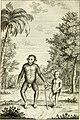 Vue philosophique de la gradation naturelle des formes de l'etre, ou Les essais de la nature qui apprend a faire l'homme (1768) (14744936716).jpg