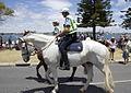 WA Police Horses.jpg