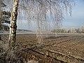 WILCZE ŁUGI O PORANKU - SZRONEM MALOWANE - 32 - panoramio.jpg