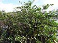 Wakodahatchee Wetlands pic.aaa9025.jpg