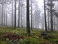Wald am Pröller.jpg