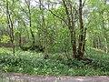 Wald im Frühling.jpg