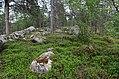 Walking trail, Inari, Finland (7) (35849009414).jpg