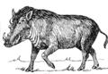 Warthog (PSF).png